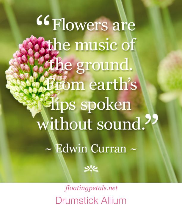 Quotes About Bouquets Of Flowers: Life Quotes & Humor