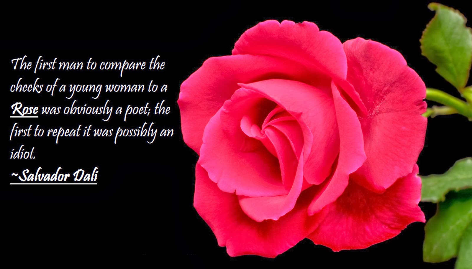 Rose Quotes Love 23 Rose Quotes  Life Quotes & Humor