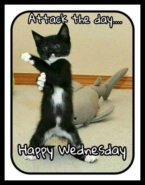 Top 23 Happy Wednesday Quotes - Life Quotes & Humor