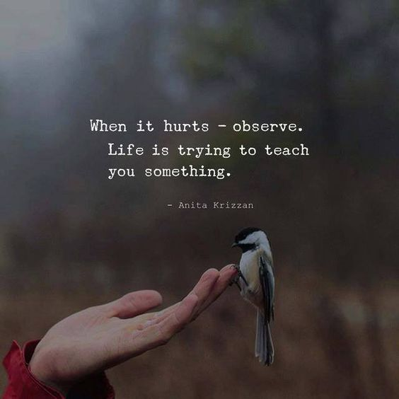 Every Pain Gives A Lesson Quotes Life Quotes Humor