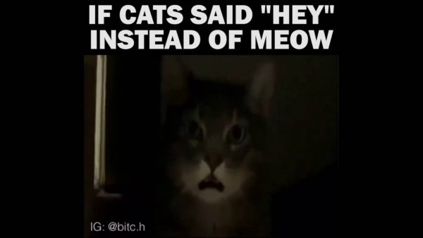 Top 18 #cat #saying #hey