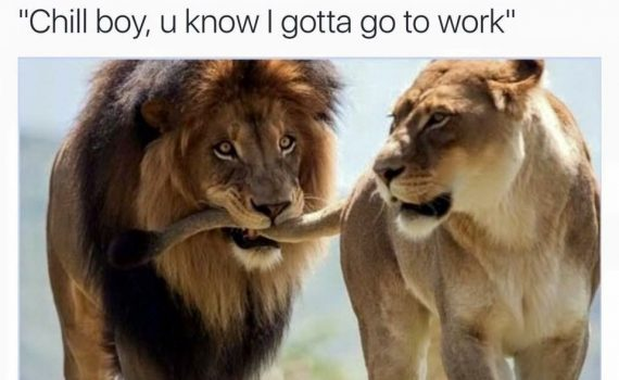 Top 18 #lion #king #meme
