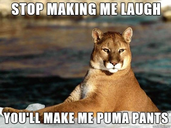 24 Hilarious puns Can't Stop Laughing