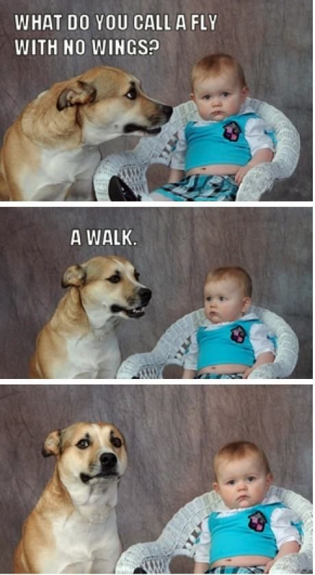 Top 20 Hilarious puns that are so Funny