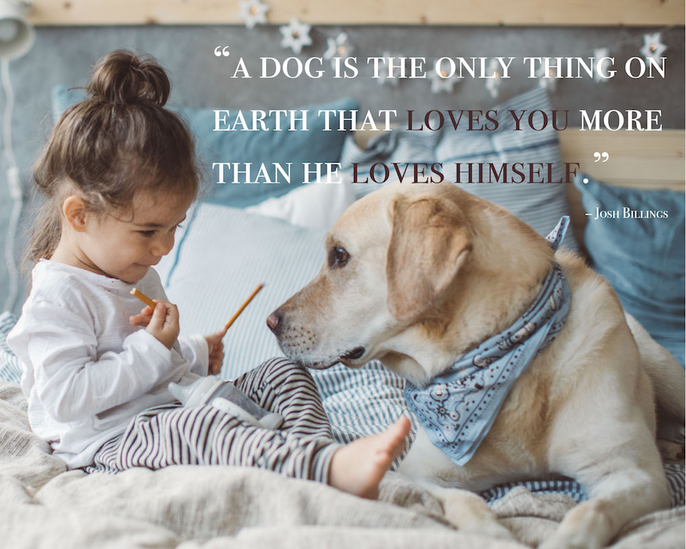 26 Funny Quotes Dogs